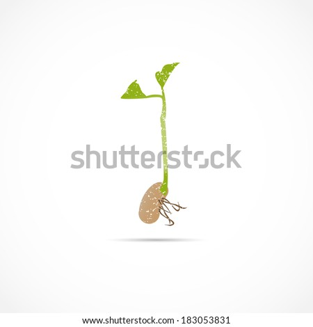 Bean Sprout Seedling