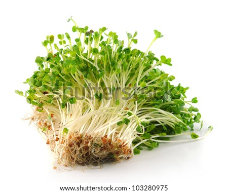 Bean Sprouts on White Background - stock photo