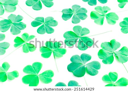 Bear Clover Leaf Green, background - stock photo