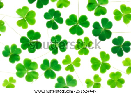 Bear Clover Leaf Green, background, blur background - stock photo