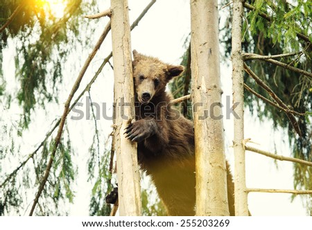 Bear Cub in Tree - stock photo
