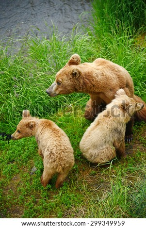 bear cubs and mother  - stock photo