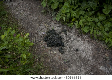 Bear excrement on the walking path in the mountains, Slovakia
