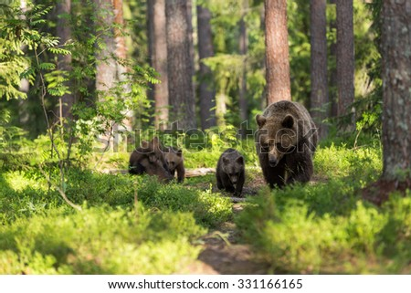 Bear family in deep forest - stock photo