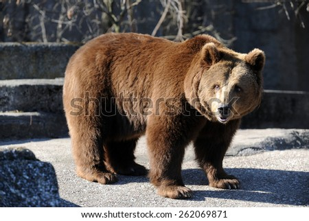 Bear in a croft in the middle of the big city. - stock photo