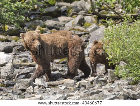 bear mother and cub looking back