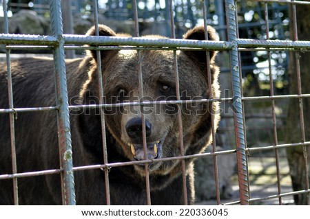 bear on cage - stock photo