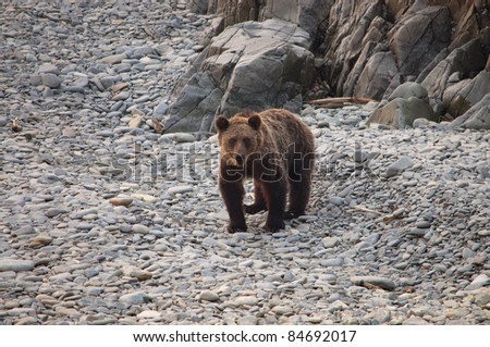 bear on the shore near the rocks