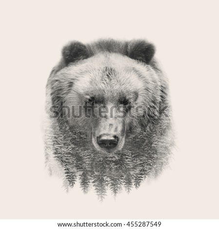 bear portrait double exposure
