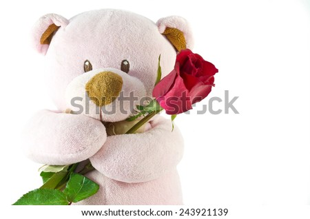 bear with red rose on white background - stock photo