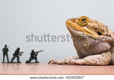 Bearded Dragon Attacked By Plastic Soldiers Foto de stock (libre de ...