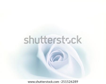 Beatiful blurred blue rose faded on white background. - stock photo