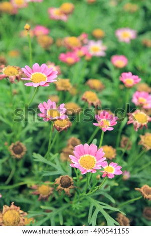beatiful daisy on grass. spring floral landscape
