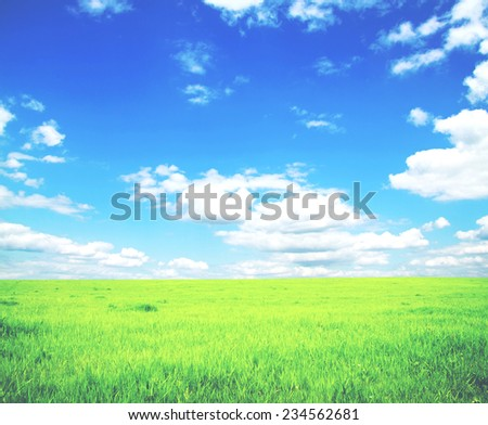 Beatiful morning field  - stock photo