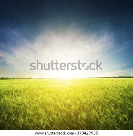 Beatiful morning field with bright sun - stock photo