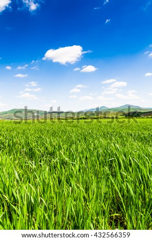 Beatiful morning green field with blue sky