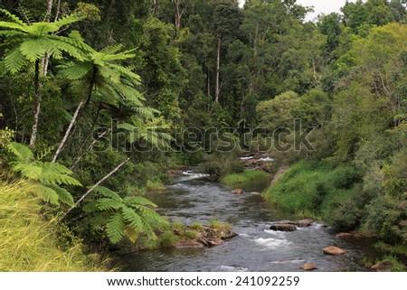 Beatrice River, Atherton Tablelands, Queensland, Australia - stock photo