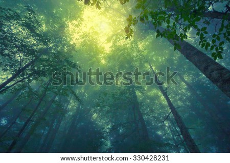 Beautful tranquil lanscape of mountain foggy forest - stock photo