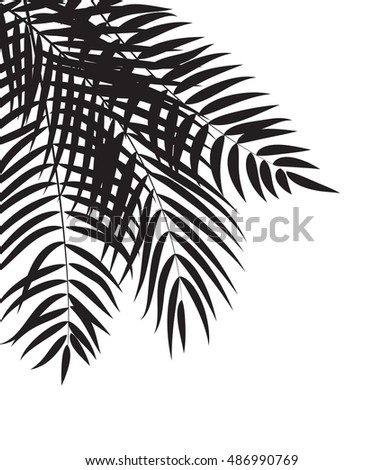 Beautifil Palm Tree Leaf  Silhouette Background  Illustration