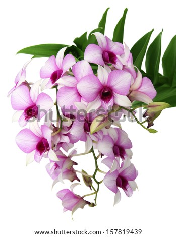beautifl orchid isolated on white  - stock photo