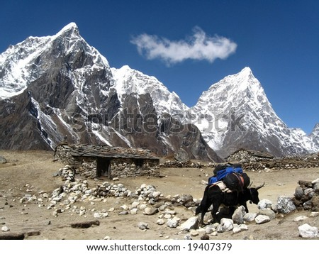 beautifle landscape in himalaya with one yak animal and old stone house