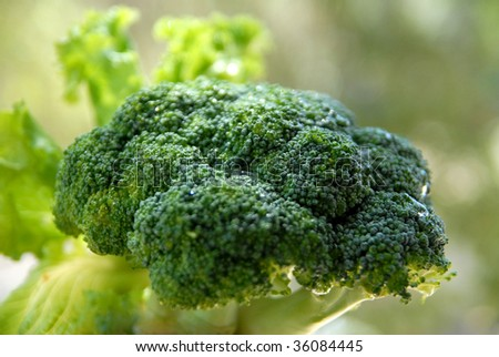 Beautiful a broccoli with a water drop - stock photo