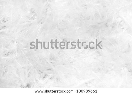 Beautiful abstract background consisting of white feathers - stock photo