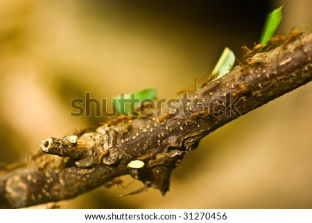Beautiful abstract colony of ants marching food back to the nest - stock photo