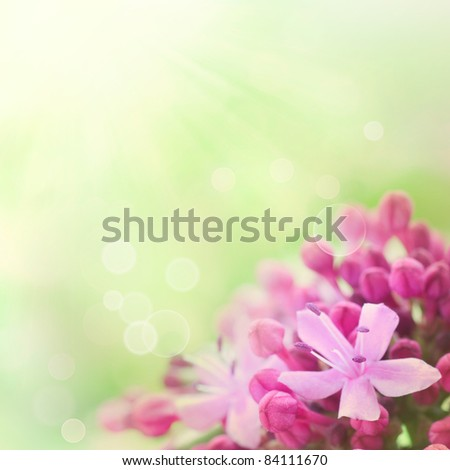Beautiful abstract floral background with pink flower buds and defocused lights. Border design in pink and green - stock photo