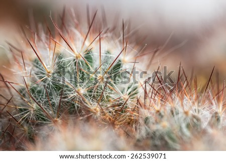 Beautiful abstract floral background with soft needles cactus closeup - stock photo