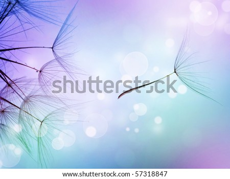 Beautiful Abstract flying Dandelion seeds - stock photo