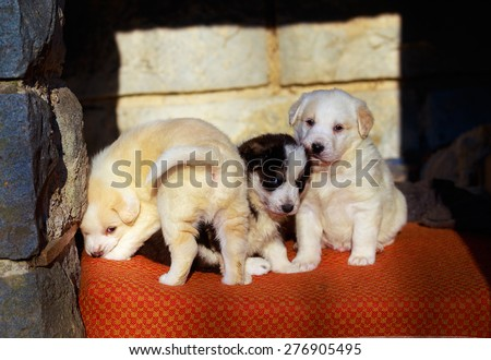Beautiful adorable group of shepherd dog puppies in an outside shelter - stock photo