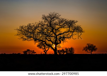 Beautiful African landscape at sunset with branches of trees in the background. Isimangaliso Wetland Park, KwaZulu-Natal, South Africa.