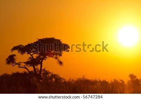 Beautiful african sunrise - stock photo