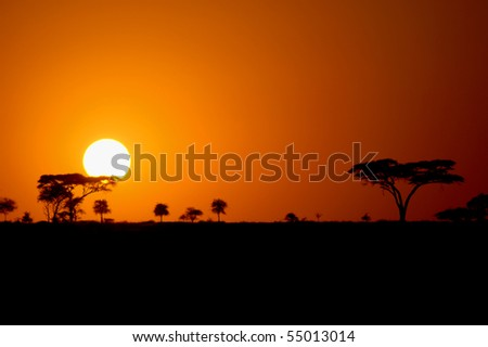 Beautiful african sunset in the Serengeti Park, Tanzania with silhouettes of acacia trees - stock photo