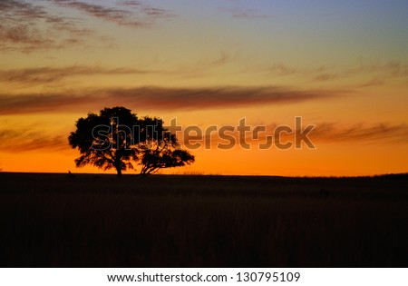 Beautiful african sunset landscape and tree silhouette in savanna - stock photo