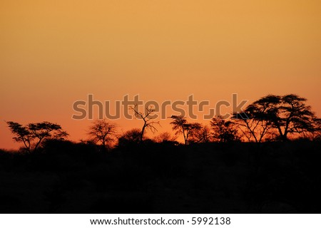 Beautiful african sunset, with acacia tree silhouette. - stock photo