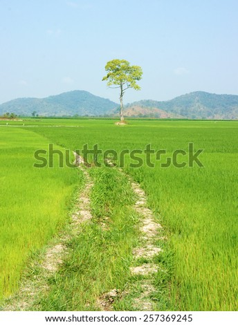 Beautiful agriculture field at Buon Me Thuot, Daklak, Vietnam, tree on green paddy field, eco place for Viet Nam travel, vast landscape under sky