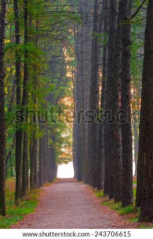 beautiful alley in the forest and morning fog - stock photo