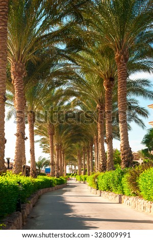 Beautiful alley road from green tropical palm tree. Summertime vibrant multicolored outdoors vertical image. Egypt. Sharm-el-sheikh - stock photo
