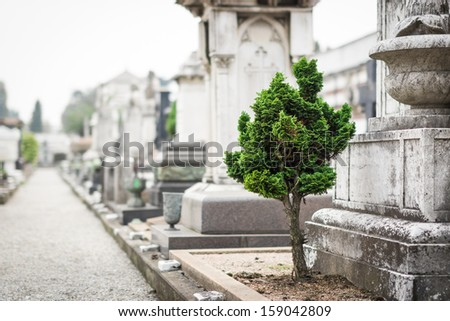 Beautiful alley with ancient graves, Cimitero Monumentale, Milan. Selective focus on tree. - stock photo
