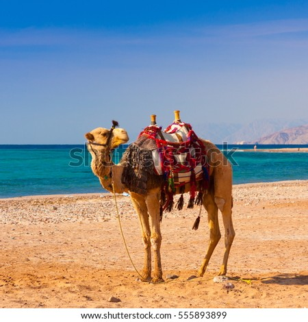 Beautiful amazing nature background. Tropical blue water. Red sea. Holiday resort. Camel animal. Fresh  freedom. Adventure day. Luxury paradise. Inspiring wilderness