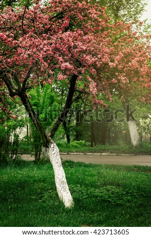 beautiful amazing pink blooming tree in spring sunny countryside garden