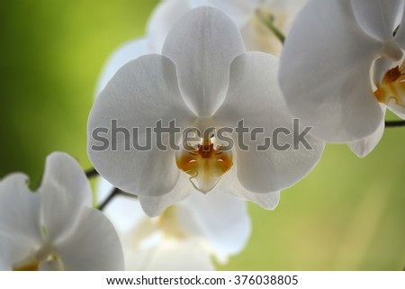 Beautiful amazing tender elegant white blossom of orchid flower decorative exotic plant beauty of nature cute floral wallpaper greeting card on green blur background closeup outdoor, horizontal