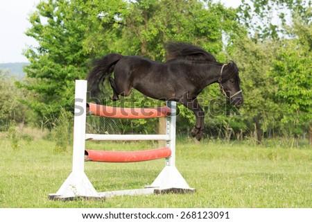 Beautiful American Miniature Horse stallion jumps over an obstacle - stock photo