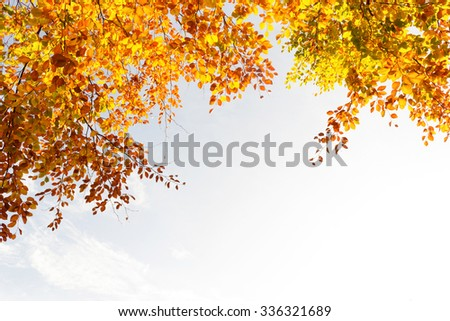 Beautiful and bright autumnal trees in Airdrie, Scotland - stock photo