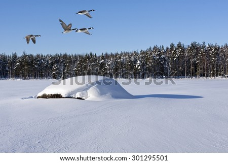 Beautiful and cold winter day on a lake. Rock and shadow in the snow. Canadian geese in the air and a forest in the background. - stock photo