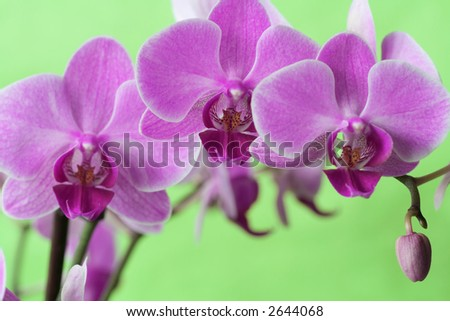 Beautiful and colorful orchids for background use. Concept: Beauty