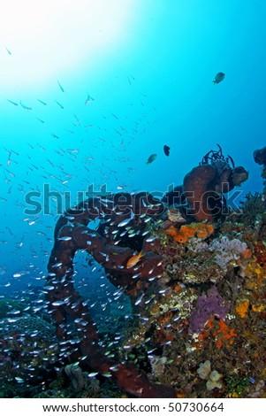 beautiful and colorful underwater view at Ambon, Maluku, Indonesia - stock photo