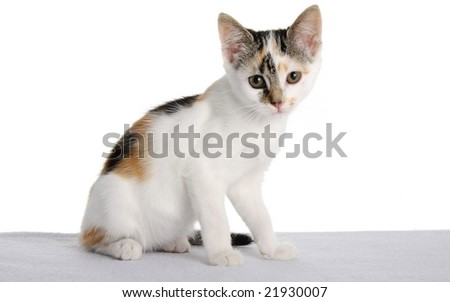 Beautiful and cute kitten with ginger and black markings - stock photo